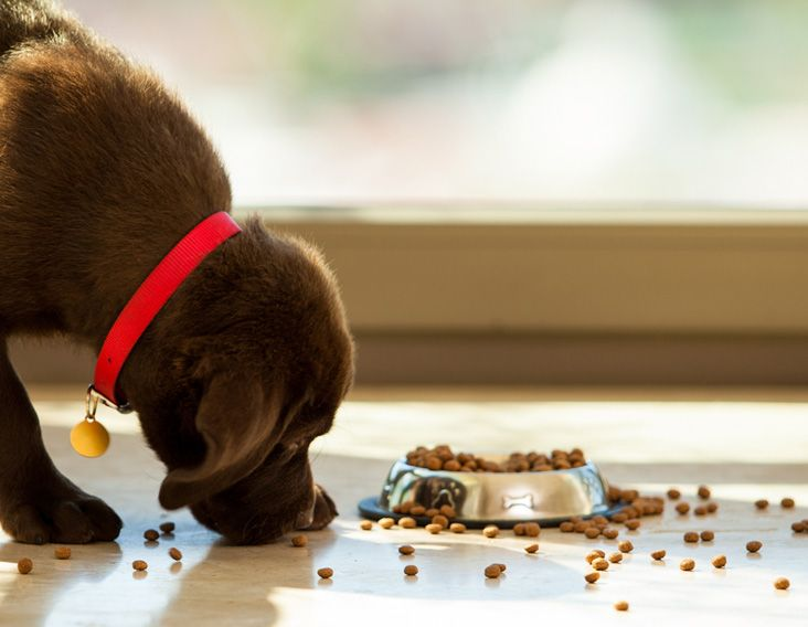 Best Dog Food To Put Weight On Pit Bulls