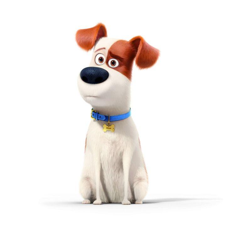 La compañía de animación que le dio vida a los Minions, ahora nos hará descubrir lo que tantas veces nos preguntamos: ¿Qué hacen nuestras mascotas cuando nosotros nos vamos de casa? La película cuenta con simpáticos animales animados y, por lo tanto, también han tenido que buscar voces acordes para darles vida. Aquí te proponemos conocer a cada una de las mascotas que forman parte del filme y además te vamos a mostrar las caras de los actores que les ponen su voz a los personajes…