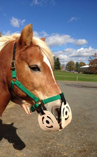 Ask Dr. Harman: Holistic treatment for ulcers « The Harmany Equine Clinic