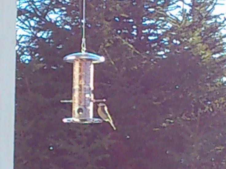 Fuglene må få mat :)