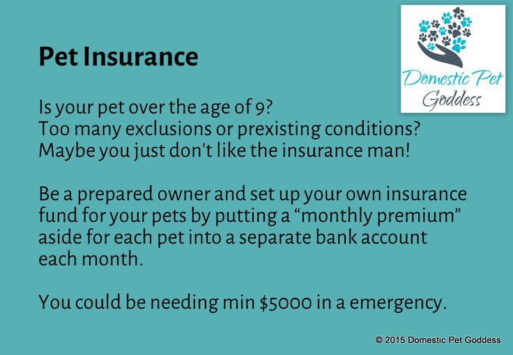 taking out pet insurance through a company doesn't work for everyone, but being prepared for the ongoing medical treatment costs of your pet is important - use a high interest bank account to earn extra dollars ~dpg