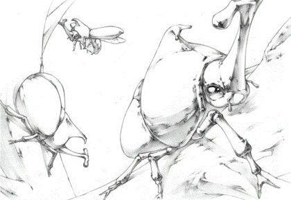 장수 풍뎅이 스케치