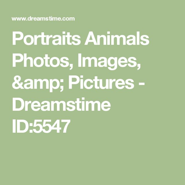 Portraits Animals Photos, Images, & Pictures - Dreamstime ID:5547