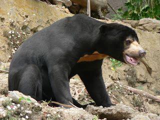 AzidAkaMember Blog: 33 Binatang Khas Seluruh Propinsi di Indonesia