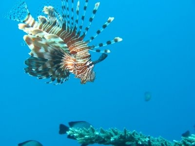 Diving picture from Eilat. Beautiful :) www.atlas.co.il