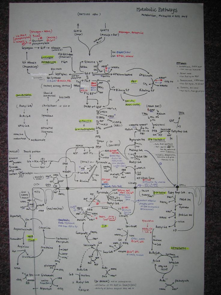 Metabolic Pathways  The only proven diet..  This is when you but a whiteboard..