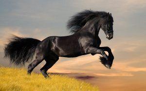 Mustang  Esta raça de cavalo, atualmente americana, encontra a sua origem nos cavalos europeus trazidos para a América na época da conquista.    Desta forma, o começo da história dos Mustand encontra-se na chegada do cavalo ibérico ao continente....