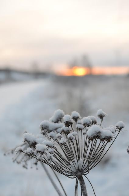 Scandi Home: Arctic Winter