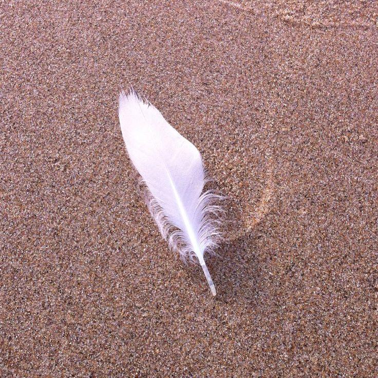 Witte veer op het strand van Texel #paal17