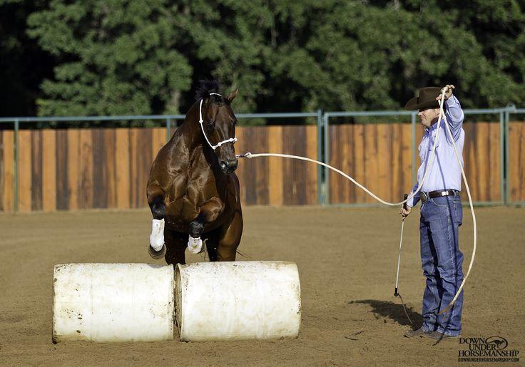 groundwork horses - 736×515