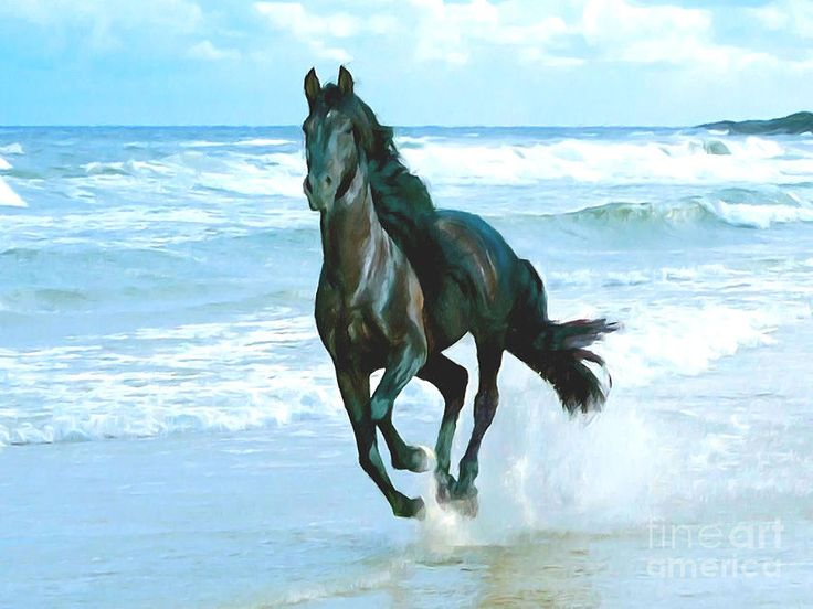 Black Horse Running Through Water | Running, Black horses ...