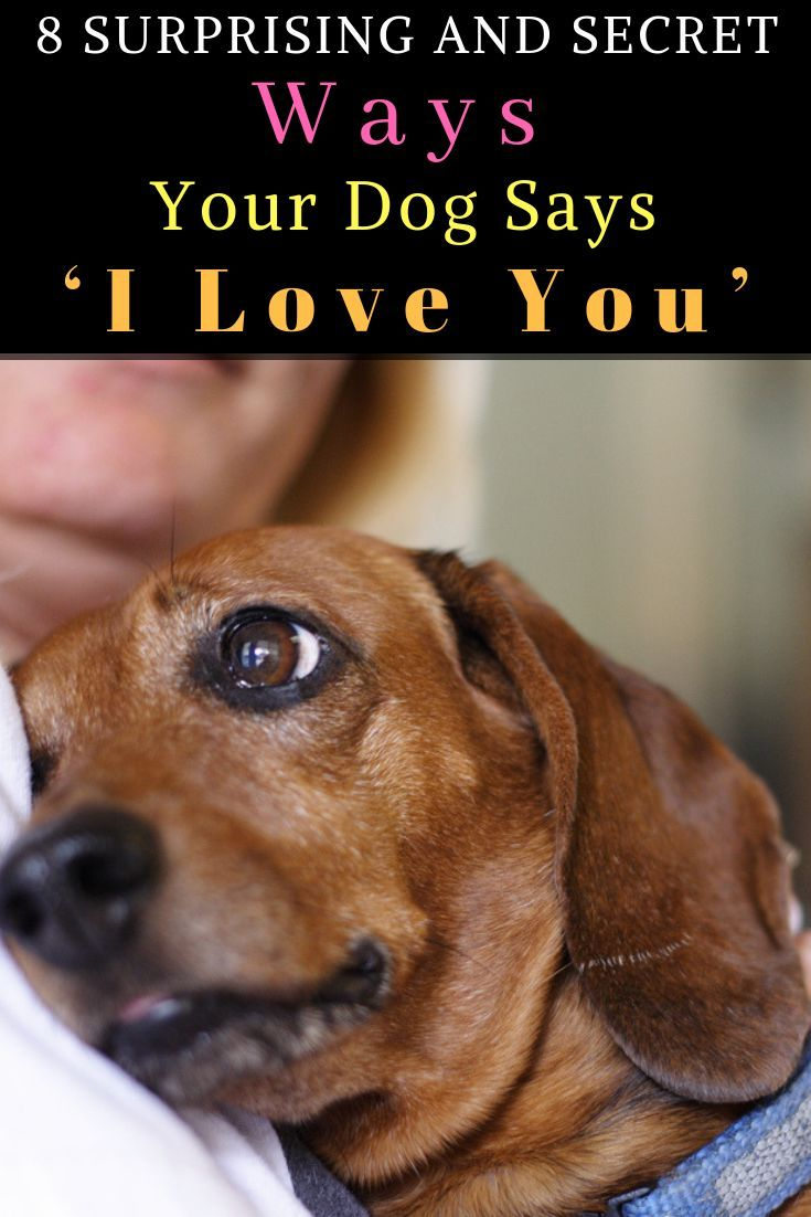 8 surprising and secret ways your dog says i love you