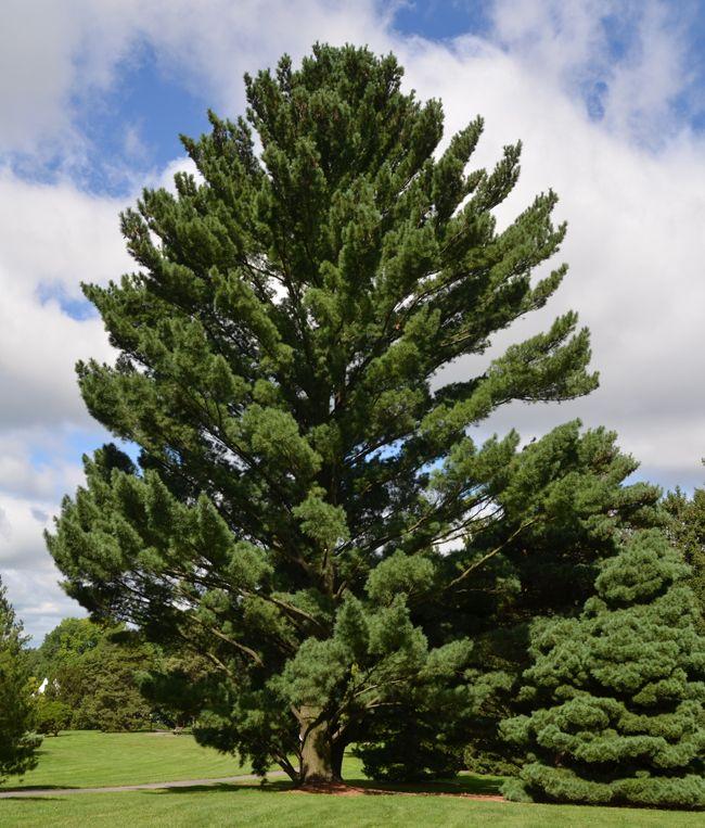 Maryland Native Plants: 39 Best Maryland NATIVE Plants Images On Pinterest