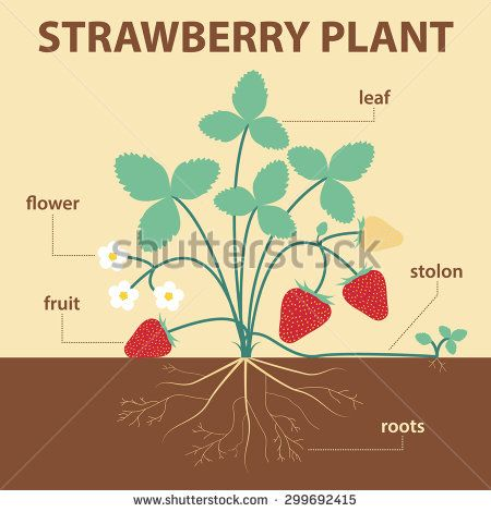 strawberry spring analysis Strawberry spring - plot summary plot summary an unnamed narrator sees the words  springheel jack  in a newspaper, which leads him to recount a time, about eight years ago, when he was at new sharon college.