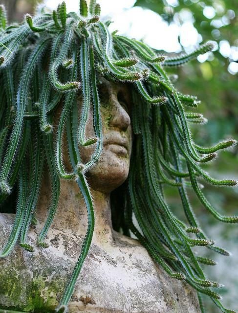 17 best images about living plant sculptures on pinterest gardens cornwall and topiary garden - Medusa head planter ...