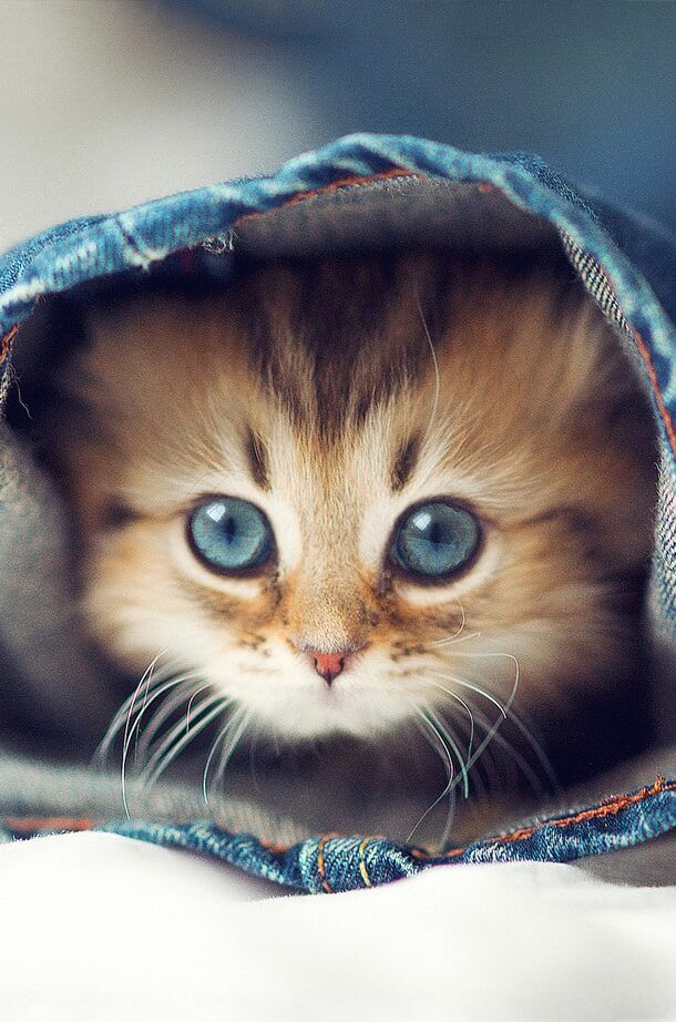 15 Cute Iphone Wallpapers Hd Quality Free Download Cute Puppy Wallpaper Iphone Wallpaper Kitten Kittens Cutest