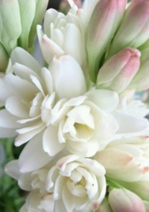 Tuberose... SMELLS SOOOOOOO GOOD !!!