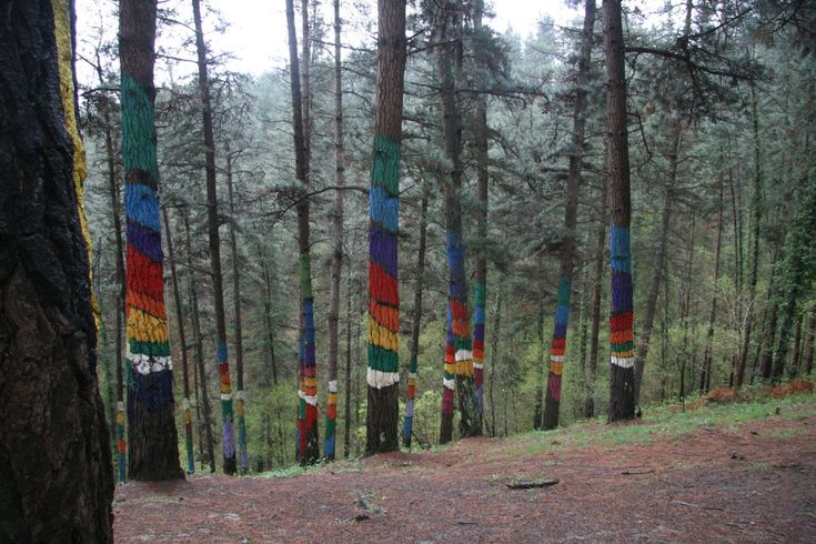 Malowany las / Painted Forest