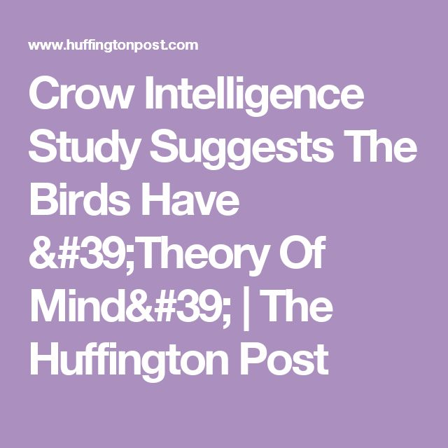 Crow Intelligence Study Suggests The Birds Have 'Theory Of Mind' | The Huffington Post