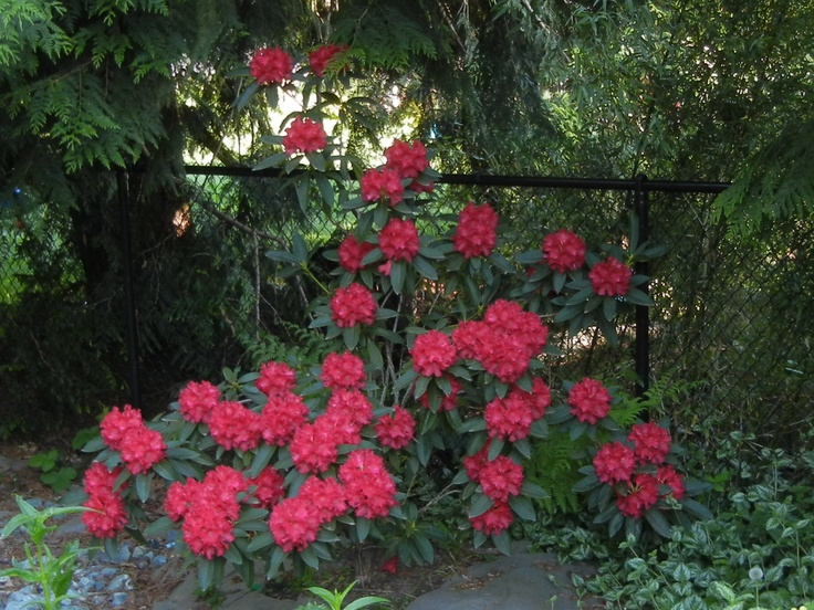 12 best Gardening in Zone 8b - 9a images on Pinterest ...