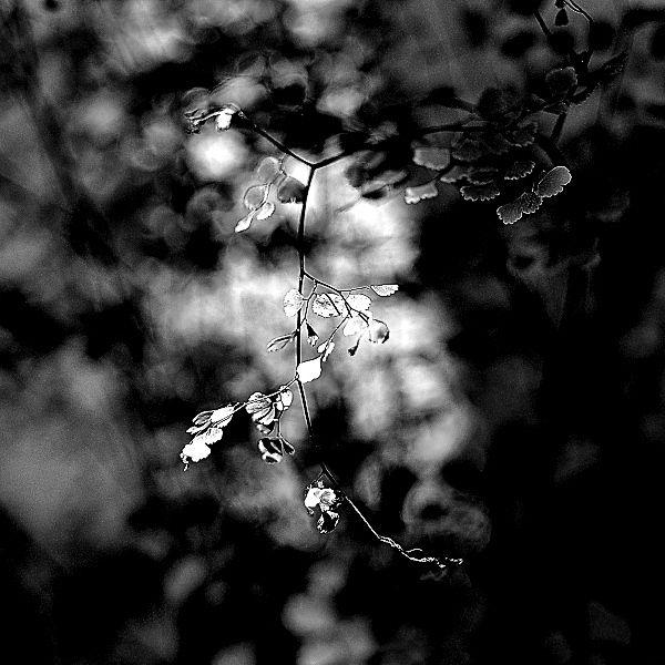 Nikkor 35mm f/2.8 Pre-Ai: Digital Moments 01