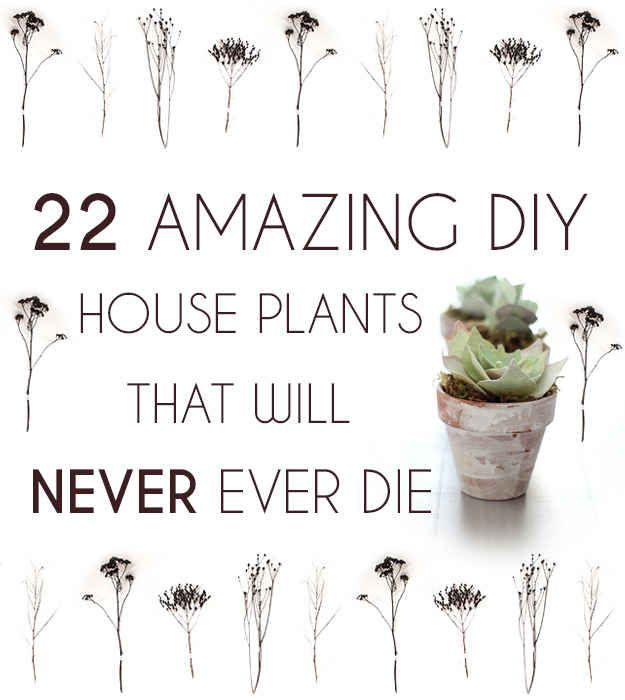 22 Amazing DIY House Plants That Will Never Ever Die