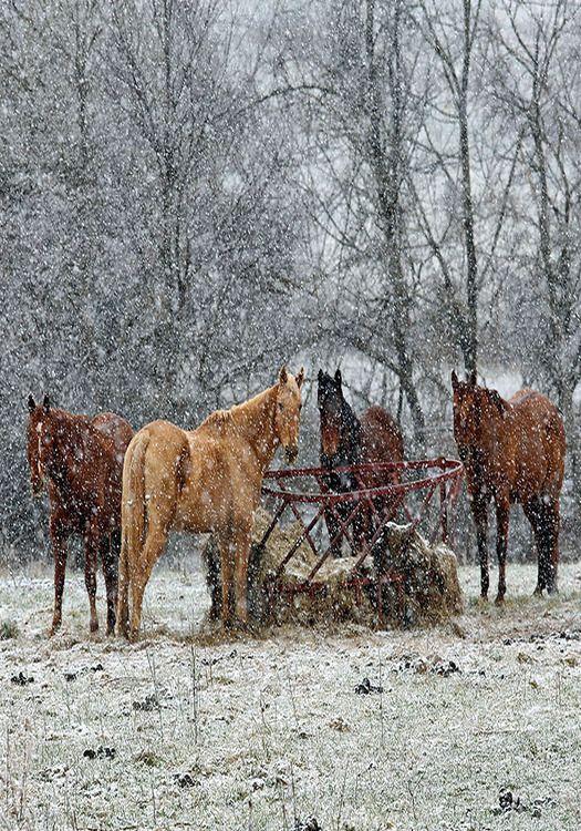 Country Living ~ Winter Farm, Horses