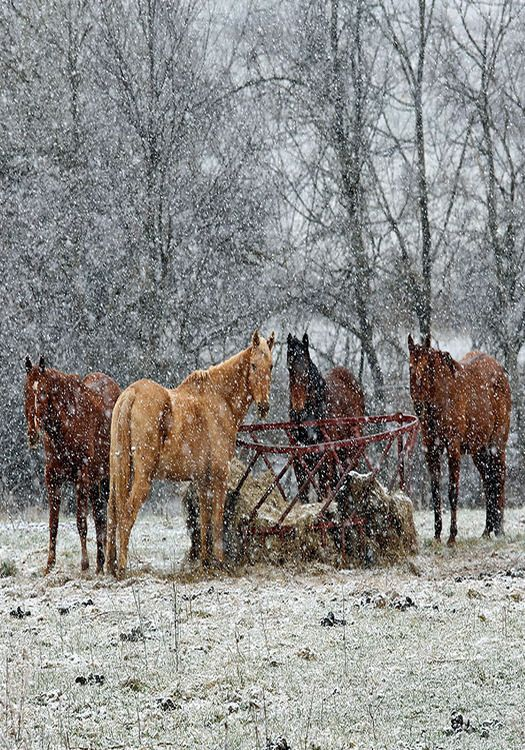 Country Living ~ Winter Farm, Horses