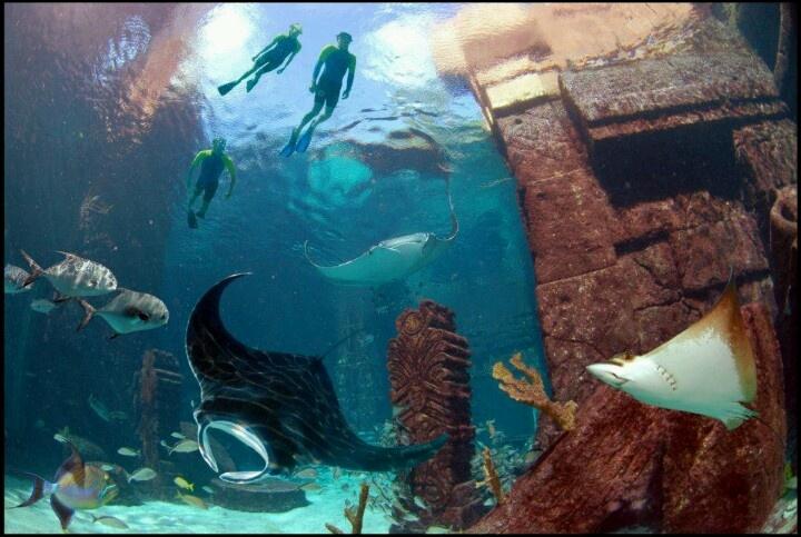 Mi paraíso serían unas vacaciones con mi familia en ese espectacular hotel, y tener la oportunidad de nadar con animales tan hermosos como los que hay en Su acuario # paraisocopa