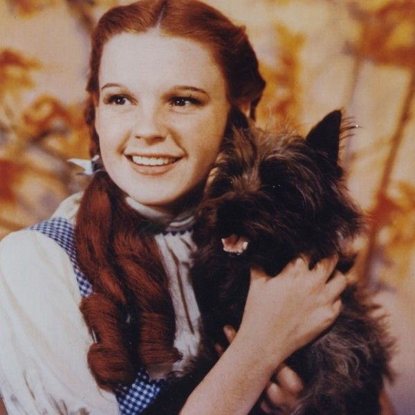 119 best images about dogs on pinterest chihuahuas for Dorothy gale