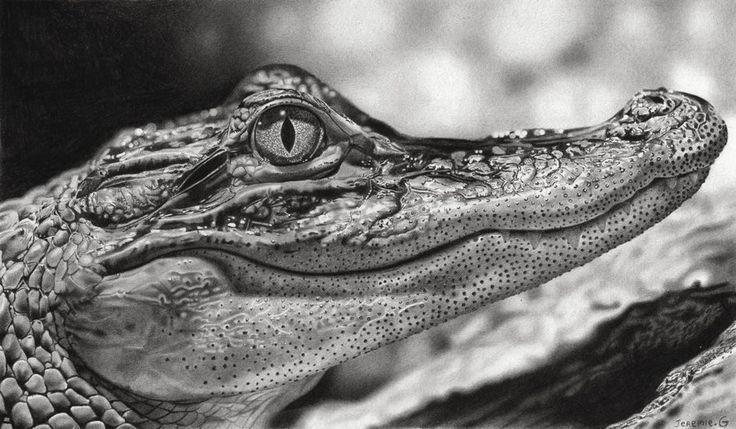Les 25 meilleures id es de la cat gorie dessin de crocodile sur pinterest clochette film f e - Crocodile dessin ...