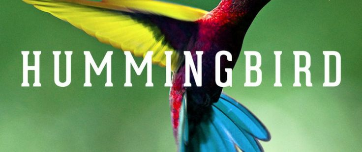 How Hummingbird changes the SEO world