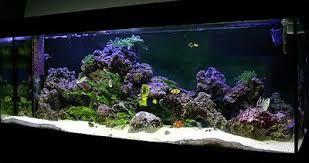 Resultado de imagen para peceras marinas