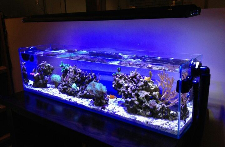 12gallon Mr Aqua Tank Rimless Aquascaping Aquarium Pinterest Aquariums Fish Tanks And