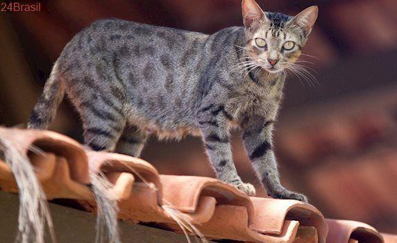 Condomínio contrata empresa dedetizadora para reduzir população de gatos
