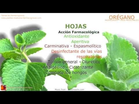 Propiedades del orégano. Nombre científico. Usos y Propiedades medicinales del orégano, beneficios,  remedios naturales.