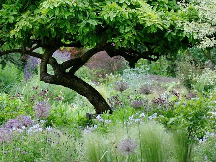 roundhill cottage east dean sussex uk turn grass into plant bed under tree