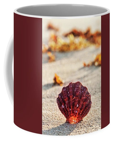 Coffee Mug featuring the photograph The Most Beautiful by Evgeniya Lystsova. Sea shell on the sandy beach at sunrise in summertime, tropical landscape, Mexico. Coffee time, Kitchen, Gift, Home and Office products. Our ceramic coffee mugs are available in two sizes: 11 oz. and 15 oz. Each mug is dishwasher and microwave safe. SHIPS WITHIN 1 -2 business days.