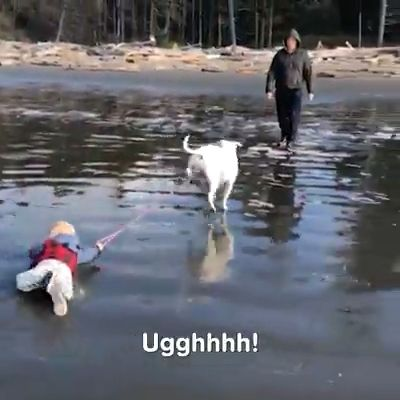 Funny Pets Vs Water Compilation 😀