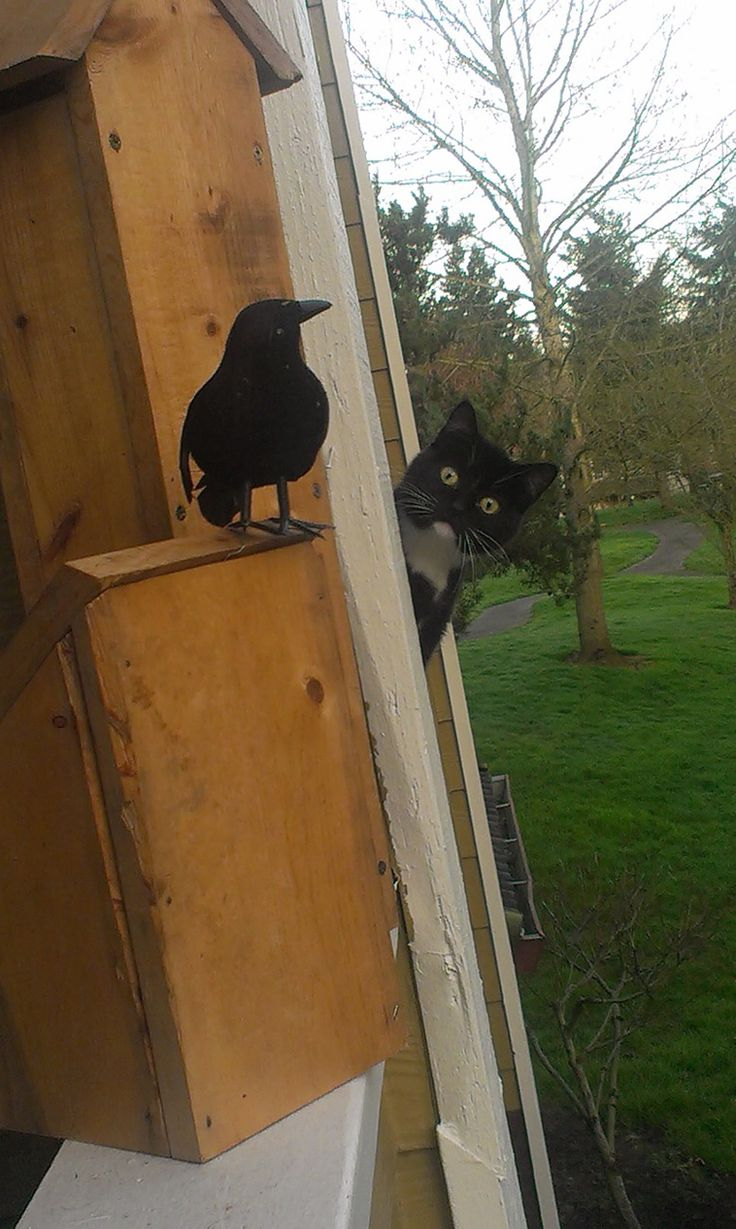 A Curious Cat Think Everything is Fake and Questioned Things Around, All Because He Found A Fake Bird