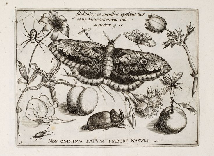 Archetypa studiaque patris Georgii Hoefnagelii, published in 1592, is a first important book of Flemish painter Jacob Hoefnagel (1573-c.1632). It is a collection of 48 engravings of insects and flowers or plants, based on drawings of Jacob's father Joris Hoefnagel (1542-1600/1601) – celebrated miniaturist, whose illuminations played a key part in an evolution of still-life painting in Northern Europe at the end of 16th century.