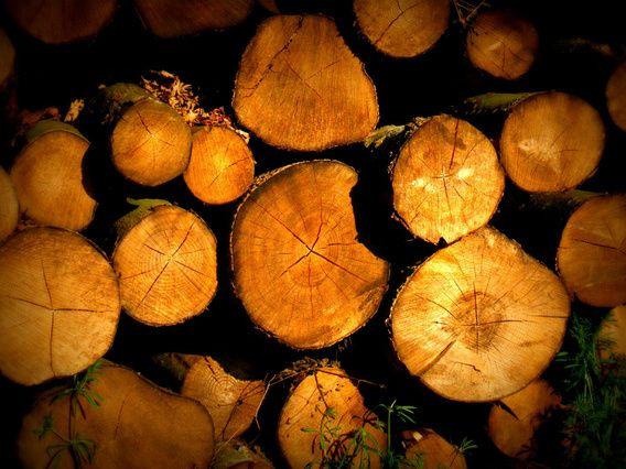 Houtstammen op stapel. Wood logs.
