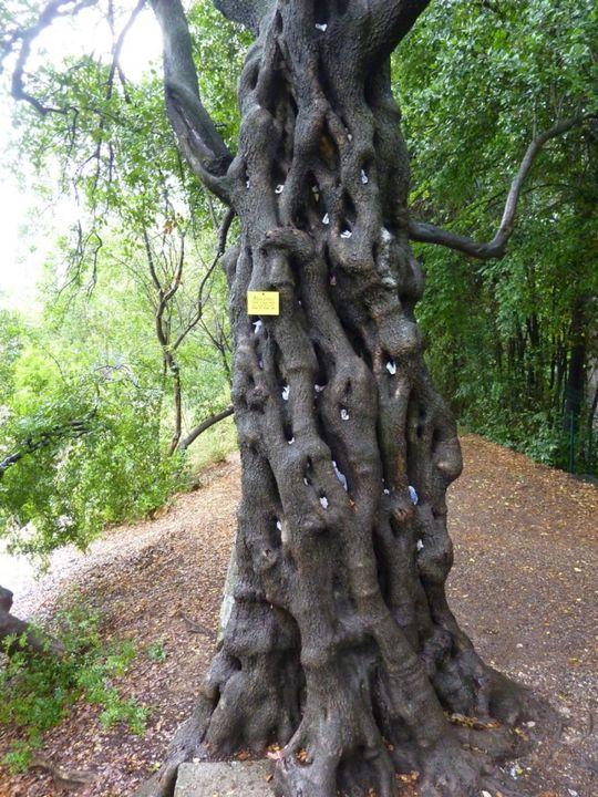 82 best le jardin des plantes de montpellier 1593 images - Jardin des plantes de montpellier ...