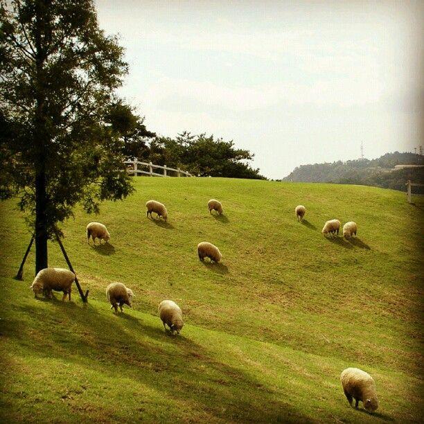 KOBE   Mt. Rokko Animal Farm in Kobe City 神戸六甲山牧場