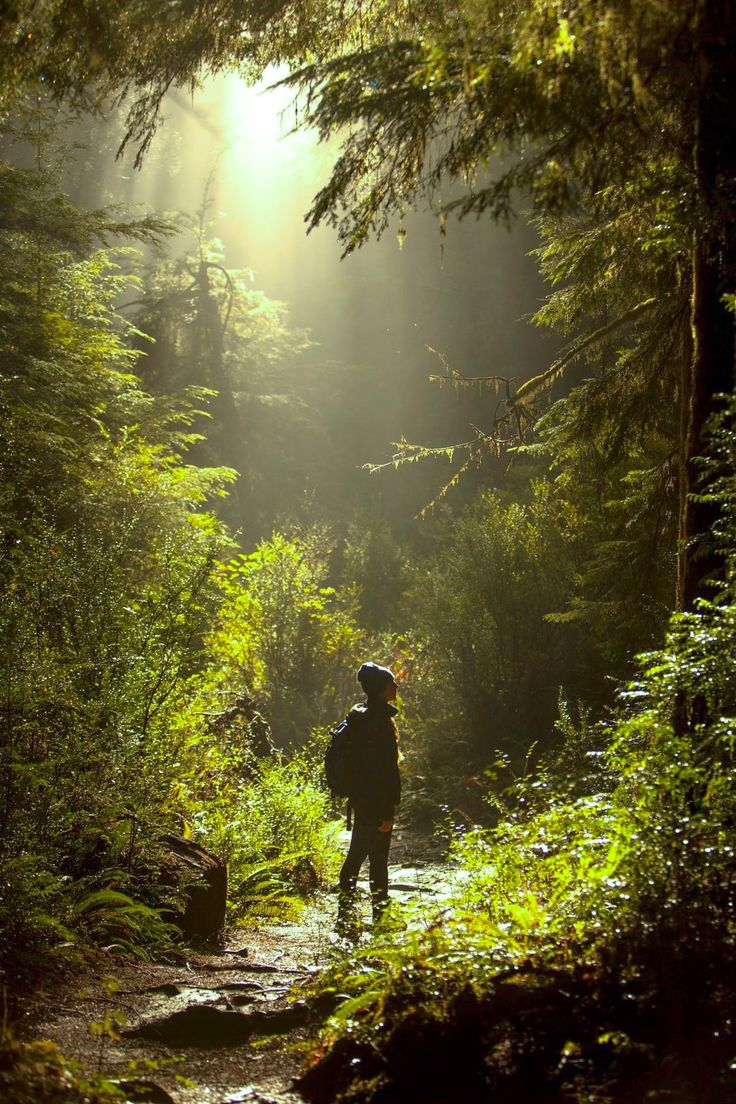 Walking amidst the redwoods (California) by Mads Peter Iversen