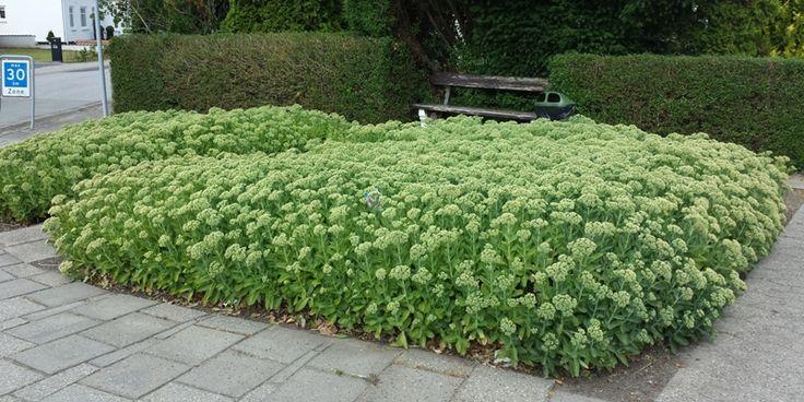 HAVEHJERNEN: Det grønne i det offentlige rum - gæsteblogger på HAVEFOLKET