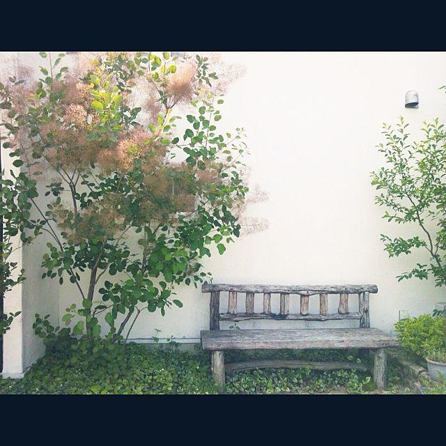 女性で、の庭/ガーデン/スモークツリー/ベンチ/玄関/入り口についてのインテリア実例を紹介。「玄関横のスペースです。ピンクのスモークツリーが満開の時期です。」(この写真は 2015-07-14 22:31:02 に共有されました)