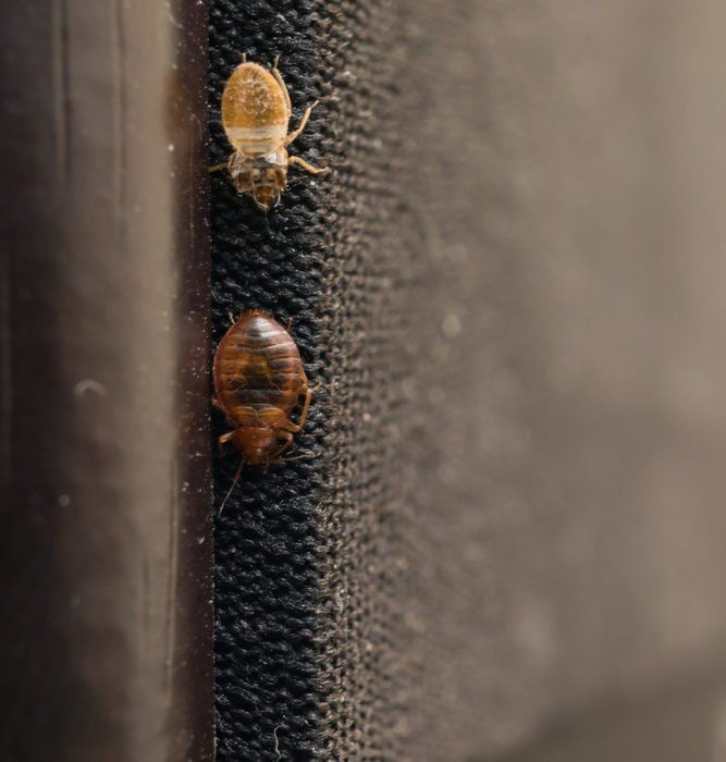 Heres How To Keep Mice Out Of Your Kitchen In 2020 Bed Bugs Prevention