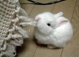 IT'S A BUNNY AND HE'S EATING SOMETHING!
