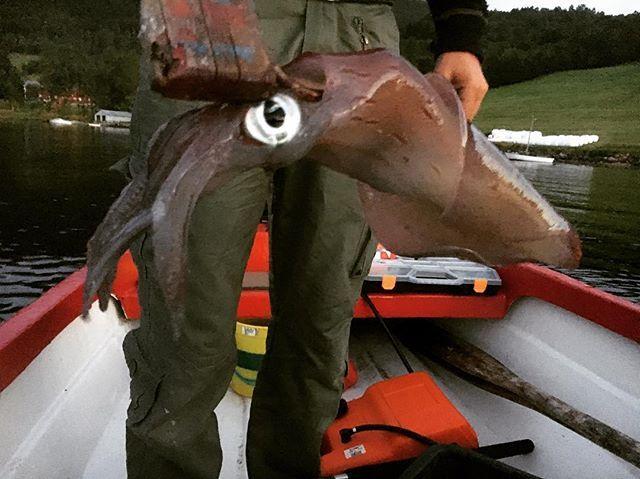Fikk denne kulingen på sluk 😅 #akkar #fiske #fisketur #båtliv #båttur #søkk3 #sommer2017 #sommer #ferie #stangfiske #sluk #torvik #tærvikja #gøitt #kulfyr #båt #liveterbestute #livetpålandet #surnadalsfjorden #surnadal #nordmøre #fishing #norge #fjordogfjell #norway #visitnorway #iamnordic #trollheimsporten #utno #yrbilder